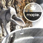 Review: Drink Maple