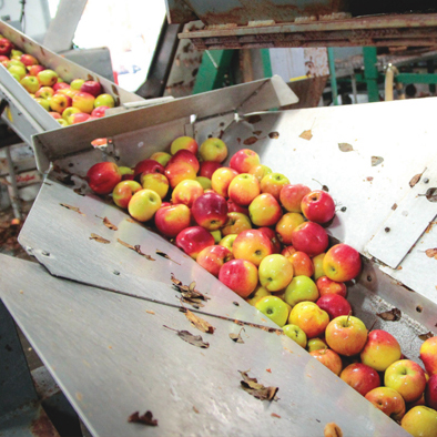 Regional Cideries on the Rise
