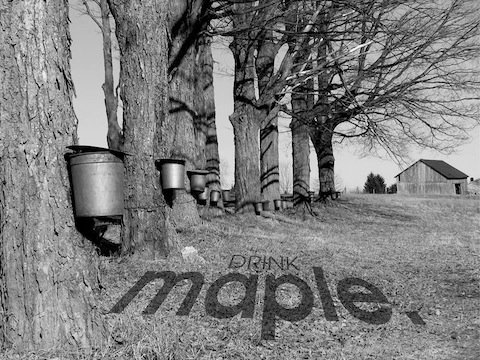 maple. to Launch on May 12