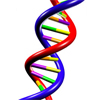 Is Evolution in Your DNA?