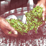 Premium, Organic Offerings Drive Growth In Tea