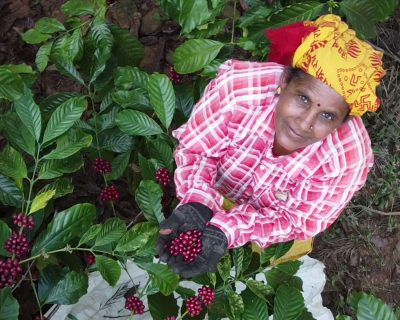 Image captured on our visit to Chikmagalur, India, where our coffee fruit is grown.