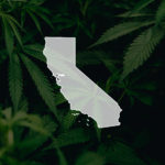 CBD Legalized in California as Governor Signs AB-45 Into Law